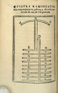 "Engraving of the venal system from ""Opera Medicinalia."""